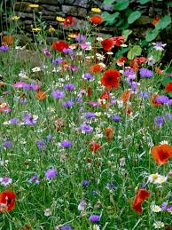 Wildflower Garden Design