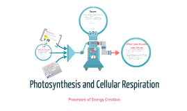 Venn Diagram Photosynthesis And Cellular Respiration Venn Diagram Of Photosynthesis And Cellular Respiration Barca