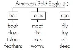 Mrss S Tree Map American Bald Eagle