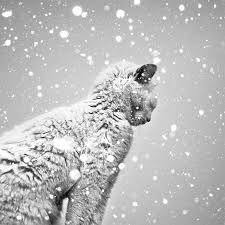 black and white snow photography. Wonderful Snow Christopher Jobson Intended Black And White Snow Photography S