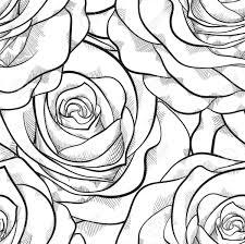 Rosa Disegno A Matita Colorato Migliori Pagine Da Colorare E