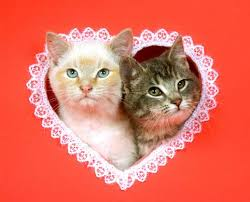 valentine cat images. Wonderful Cat To Valentine Cat Images N