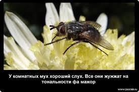 Занимательные факты о мухах фото интересные факты про мух в  Удивительные факты о мухах