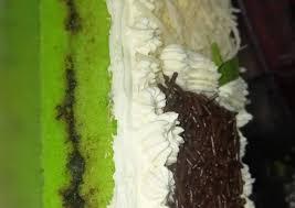 233 resep es jagung manis ala rumahan yang mudah dan enak dari komunitas memasak terbesar dunia. Resep Es Jagung Hawai Untuk Ide Jualan Takjil Bulan Puasa 187 Lezat Racikan Resep Sedap Mantap