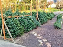 The Morse Family Christmas Tree Farm Has Been A Local Tradition Local Christmas Tree Lots