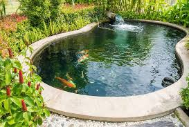 how to clean a koi pond ponds guide