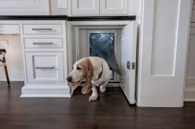 25 stylish dog door ideas for the