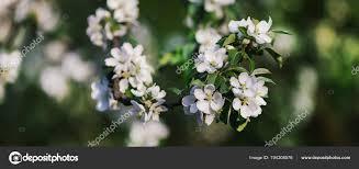 """Résultat de recherche d'images pour """"fleurs de Mai"""""""