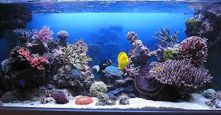 Aquarium Backgrounds My Shadowbox Background Project Reef Central Online Community