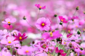 Flower Nature Wallpaper High Quality ...