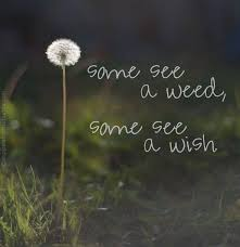 Wish Quotes Awesome Some See A Weed Some See A Wish Picture Quotes