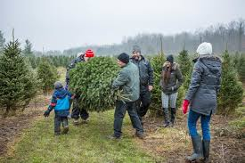 Locally grown, environmentally friendly Christmas trees create cherished  memories that will last a life-