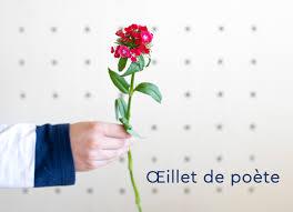 Nos fleurs du 2 au 6 novembre - Monsieur Marguerite