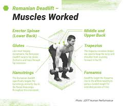 Romanian Deadlift Form Muscles Worked And How To Guide