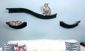the ultimate guide to cat shelves