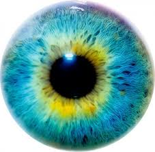 Does <b>Eye</b> Color Indicate Intelligence or <b>Personality</b>? What Are Your ...
