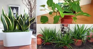 10 Best Houseplants To De-Stress Your Home And Purify The Air