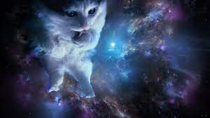 Space Cat HD Wallpapers - Top Free ...