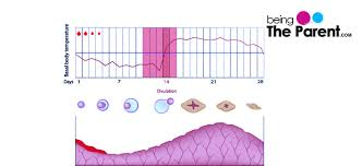 Body Temperature During Ovulation Chart Triphasic Chart And Pregnancy Being The Parent