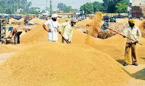 Image result for punjab mandi basmti