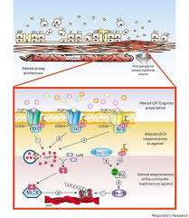 Gpcr Signaling Signaling And Regulation Of G Protein Coupled Receptors In
