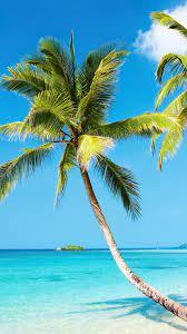 Tropical Beach 4K Ultra HD Wallpapers ...