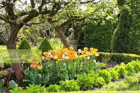 Achillea  Underplanting Fruit Trees  Plants  Pinterest  Trees Underplanting Fruit Trees