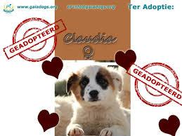 Puppy Asiel Antwerpen