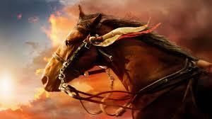 Animal War Horse Hd Desktop Wallpaper War Horse Hd
