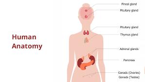 Human Anatomy Process Flowchart Visual System Nervous