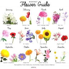 Month Flowers Chart Birthday Month Flower Colosodeoro Com