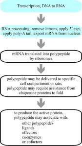 5 10 Mrna Translation And Protein Sorting