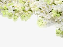 Ppt Flowers Flowers Ppt Background Flowers Ppt Background White Png Image And