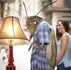 Moth Memes The Stremio Blog