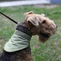 «<b>Косынка</b> для <b>собак</b> OSSO Fashion <b>охлаждающая</b> с липучкой и ...