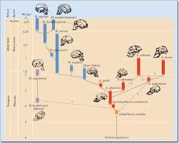 Human Evolution Timeline Chart Human Evolution Timeline Album On Imgur