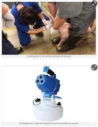 Какой путь экспозиции является наилучшим для акклимации ремонтных свинок к  Mycoplasma hyopneumoniae?
