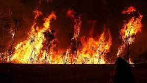 Image result for Sydney bushfire: Reports of property affected as fire eases and threat downgraded
