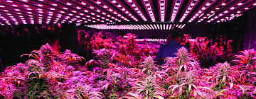 induction lighting pros and cons. Plain Pros Led Growing Lights Cannabis And Induction Lighting Pros Cons