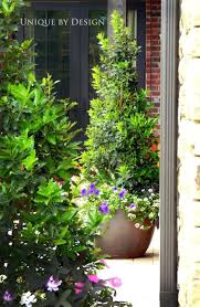 beautiful tall potted plants patio privacy for plantings bring the garden up onto with you best