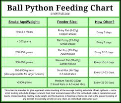 Ball Python Feeding Chart Ball Python Pet Snake Python