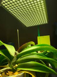 Growing Orchids Under Led Lights Any Tips On How To Grow Phalaenopsis Orchids Under Led Grow