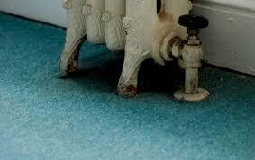 carpet paint. blue-green carpet paint