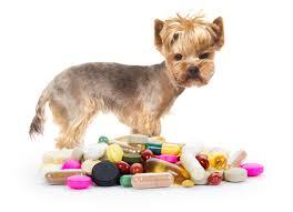 「dog medicine」の画像検索結果