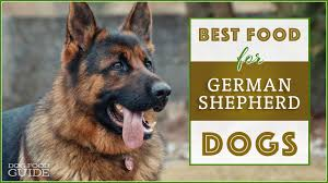 German Shepherd Puppy Food Chart 10 Best Healthiest Dog Food For German Shepherds In 2019