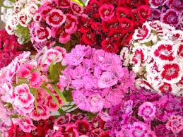 Image result for types of flowers