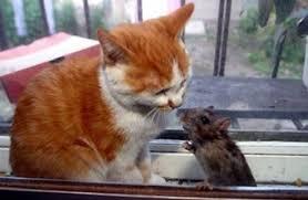 「ネコとネズミ」の画像検索結果