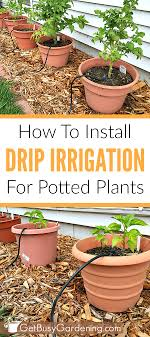 Drip Irrigation System Design And Installation How To Install A Diy Drip Irrigation System For Potted Plants