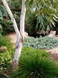 Small Picture No water gardens WILD ABOUT GARDENS Garden Design Perth WA