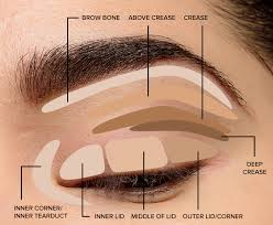 parts of the eye for applying makeup